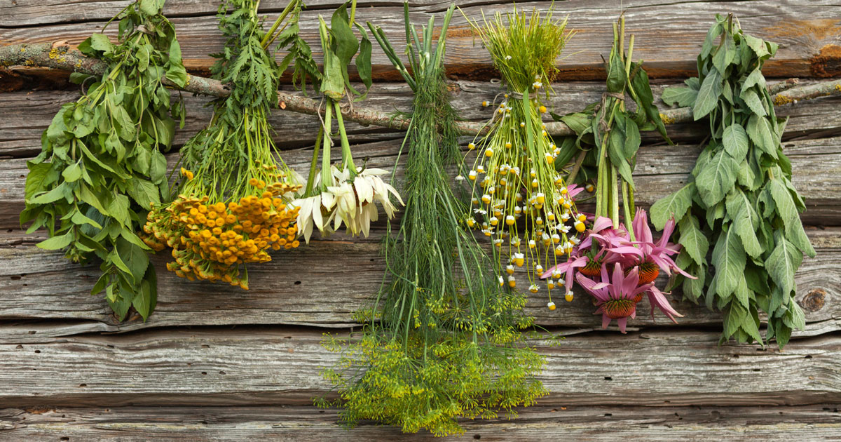 Multiple Sclerosis article: Herbs for Multiple Sclerosis Symptom Relief